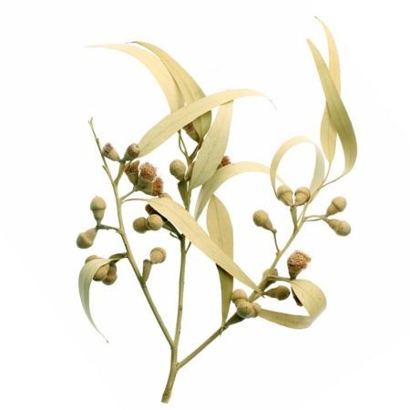 Apothecary Aroma Spray EUKALYPTUS (Eukaliptus) 30 ml